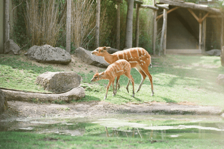 Six zoos around the world that have the most rare animals